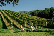 Cycling through the Wachau wine country (c) Oesterreich Werbung / Bernhard Bergmann