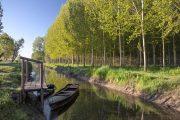 Padule di Fucecchio wetlands