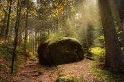 Forest trail, Saxon Switzerland National Park