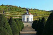 Radebul castle and vineyards