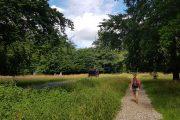 Walking in the Royal Deer Park