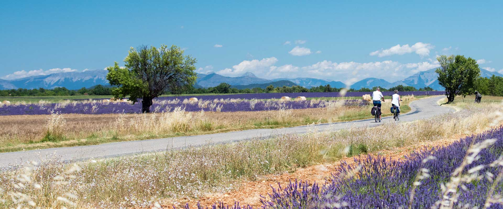 """Cycling the """"Classic Provence"""""""