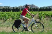 Cycling in the Alpilles