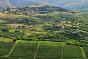 Istria vineyards