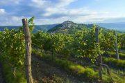 The medieval hilltop village of Motovun