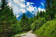 Woodland hiking path on the SalzAlpenSteig