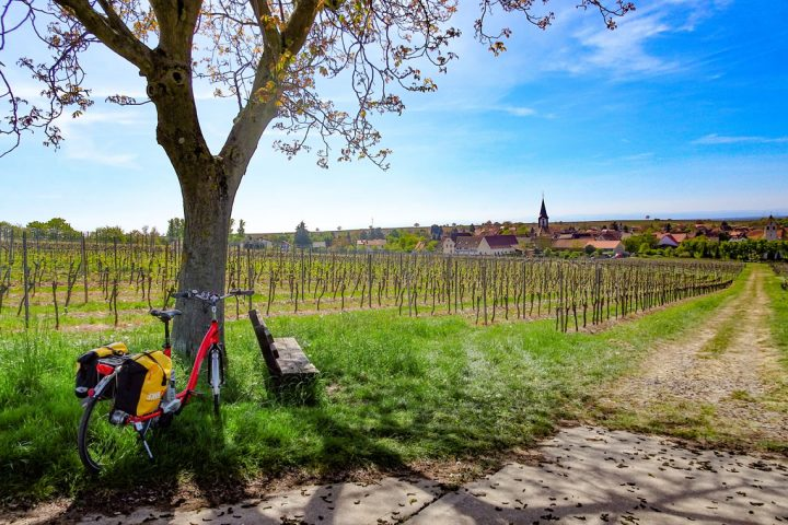 Rhine cycling Strasbourg to Mainz