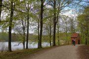 Woodland cycle path, Hellebaek