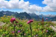 Alpine flowers along the Lechweg