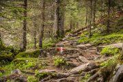 Forest hiking trail at Hintersee (c) Oesterreich Werbung, Achim Meurer