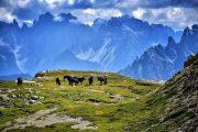 Horses grazing in the high Dolomites at the Tre Cime di Lavaredo