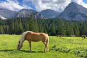 Horses in the Gaistal Valley