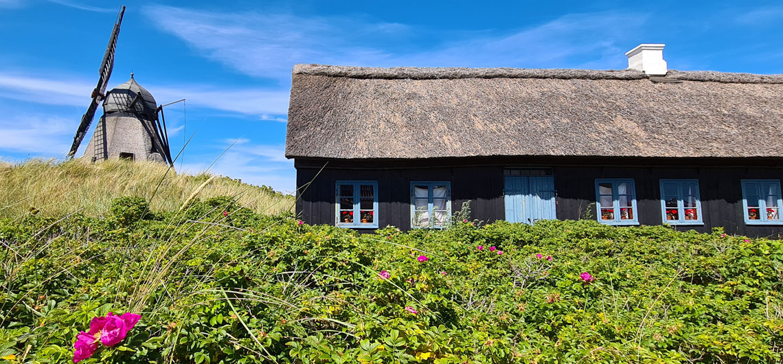 Thatched cottage and windmill along the North Sea Trail, near Skagen