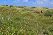 Hiking among the dunes on the North Sea Trail in Tversted