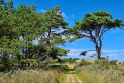 The North Sea Trail leads through the heathlands and forests of Hulsig