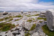 Det karakteristiske og måneagtige Burren-landskab er et af verdens største kalkstensområder