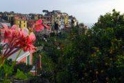Udsigt over Corniglia med blomster og appelsiner i forgrunden