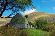 Gammelt tilgroet stenhus i Black Valley
