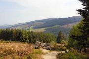 I starten af The Wicklow Way kommer man gennem Tilbradden Forest