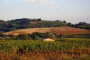 vineyards, Val d'Orcia