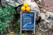 oranges, Mallorca