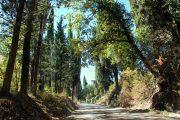 walking the strade bianchi, tuscany