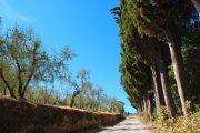 walking the chianti