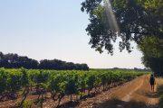 vineyard walking holiday Provence