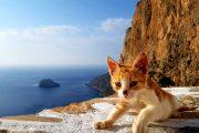 En af Amorgos mange katte - her en killing ved indgangen til klosteret Hozoviotissa
