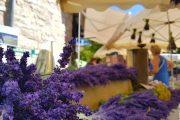 Sault lavender market