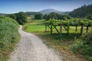 Caldas de Reis, Camino Portugues