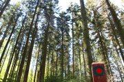 Skov nær Himmelbjerget.