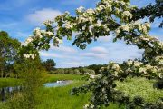 Blomstrende træer og kano på Gudenåen langs Trækstien
