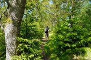 Vandring gennem en skovsektion af Trækstien