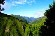 Rabacal hiking Madeira