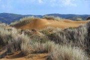 Algarve sand dunes