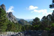 En fyrskov giver skygge for den skarpe andalusiske sol.