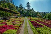 Botanisk have i Madeira (c) Francisco Correia
