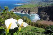 Sao Miguel coastline - Associacao de Turismo dos Acores
