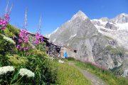 Stien passerer nogle gamle stenhytter på en skyfri dag på Tour du Mont Blanc