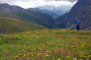 Blomstrende alpineng med udsigt over en floddal og sneklædte bjerge