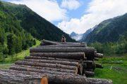 Træstammer uden for den charmerende landsby Trient på Tour du Mont Blanc