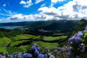Blomster ved Sete Cidades i Azorerne