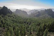 bjerge og skov på Gran Canaria