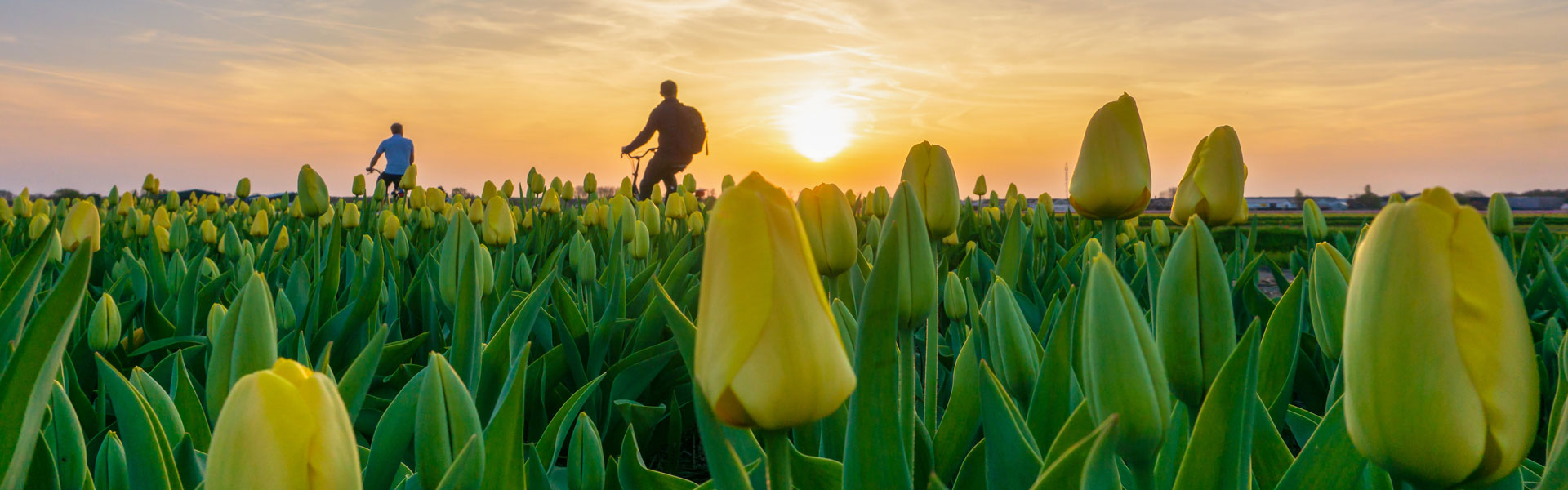 Cykelferie i Holland