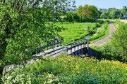 cykelsti i det hollandske landskab
