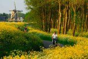 Cykling i Delft