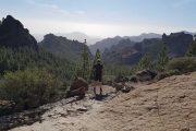 Udsigt over fyrskovsklædte bjerge på Gran Canaria