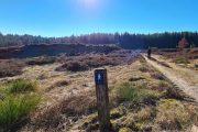 Solskinsvandring på Hærvejen i Vrads Sande