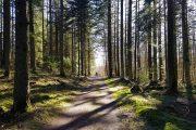 Nedergård Skov lige uden for Nørre Snede
